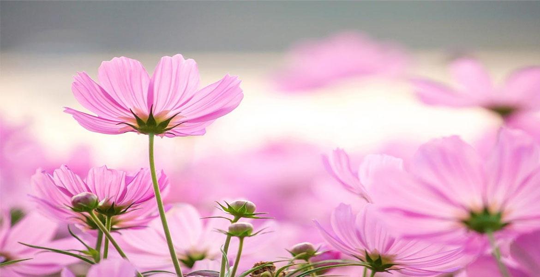 Наистина интересни факти за цветята