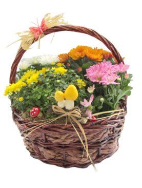 Кошница с хризантеми