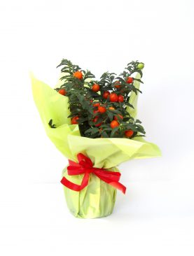 Домати - мини доматчета