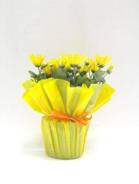 Жълти хризантеми